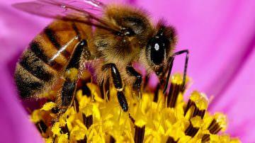 Gli apicoltori friulani hanno registrato una forte diminuizione della moria delle api