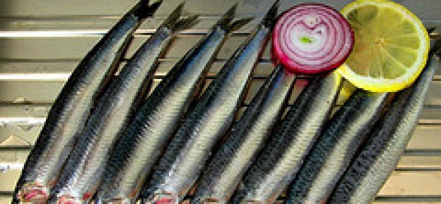 Anisakis: chi, come e perchè si deve effettuare un controllo sul pesce fresco?