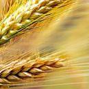 Glutenfree World Day Palermo: una giornata gratuita dedicata alla celiachia