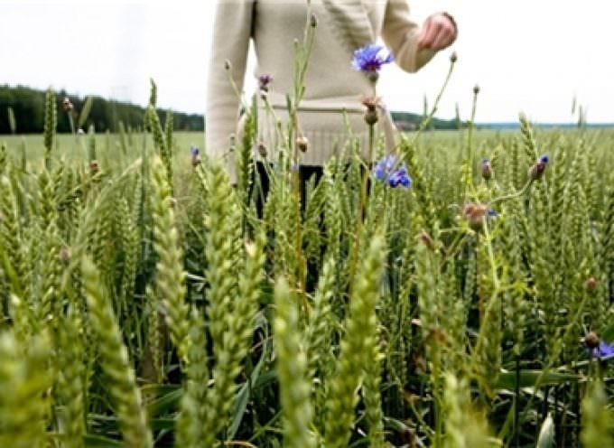 Ecologia ed alimentazione: dalla Svezia il cibo amico del pianeta