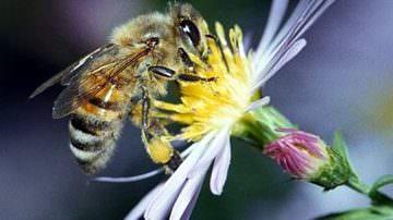 Toscana: Al via il Congresso nazionale dell'apicoltura italiana