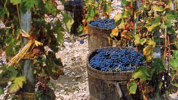 Emilia Romagna: Una vendemmia ricca di profumi