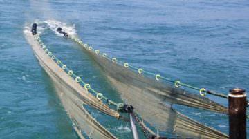 Pesce: nonostante la crisi, consumi in ripresa