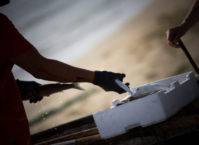 """Pesca, De Girolamo: """"Fermo biologico necessario per il futuro"""""""