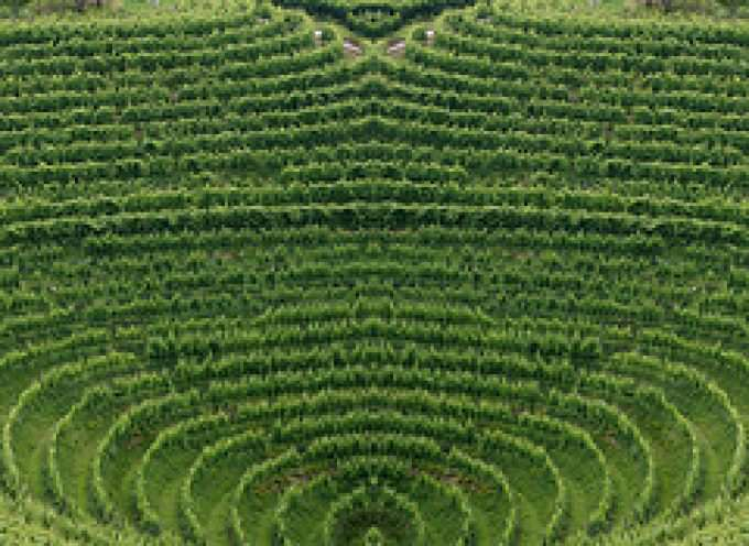Coldiretti: La produzione agricola cala del 5%
