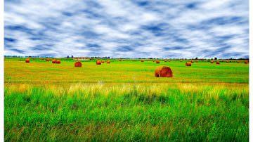Argentina: Un grande passo avanti contro la povertà, nascono i mercati agroalimentari familiari