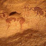 Bufalo, animale produttore di carne