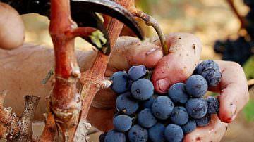 Veneto: Passa il decreto Galan, Le vinacce diventano fertilizzante