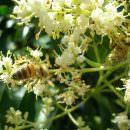 Sfida tra apicoltori e campioni del miele