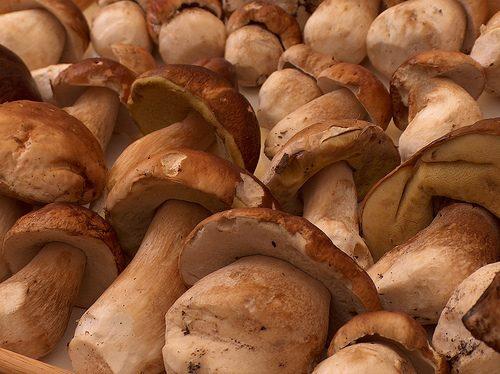Una nuova rassegna gastronomica dedicata al pregiato fungo dei boschi