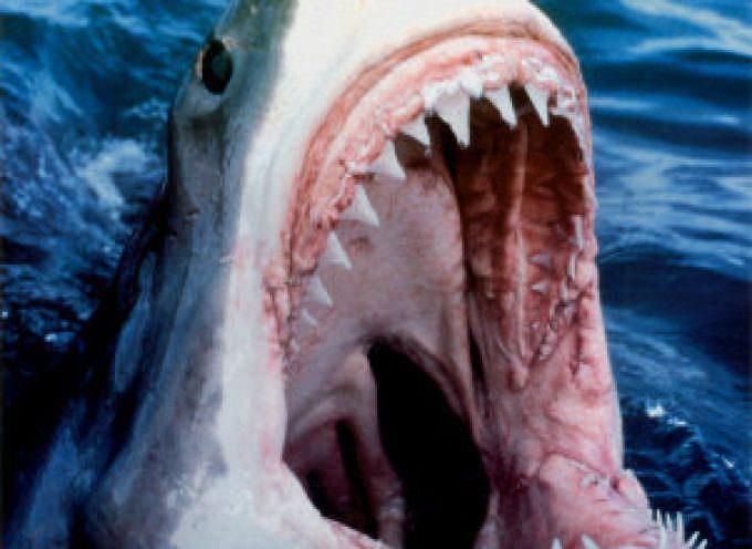 Allarme squalo. E le spiagge di Barcellona chiudono