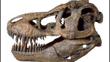 Creare dinosauri dal DNA delle galline