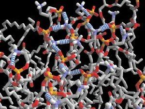 Ecco la fatostanita, la molecola che addormenta i geni del grasso