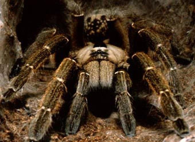 Donne, quando la paura dei ragni è scritta nei geni