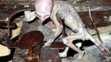 La strana creatura del Messico: baby alieno o maxi bufala?