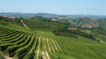 From Langhe to Monferrato. Piedmont wants to be a UNESCO World Heritage Site