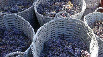 Friuli Venezia Giulia – Disposizioni urgenti in materia di ritiro sotto controllo dei sottoprodotti della vinificazione