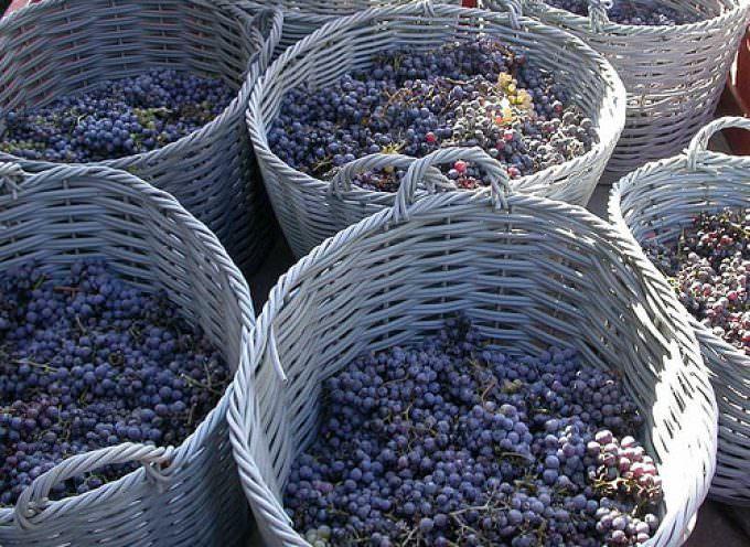 Vino: Marchesi de' Frescobaldi, la vendemmia sarà straordinaria!
