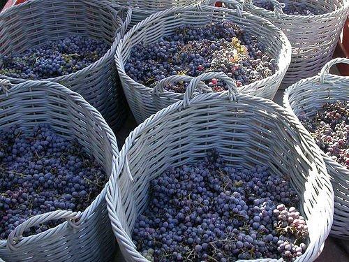 In occasione di Vinitaly, Aduc chiede alcune delucidazioni in materia vitivinicola
