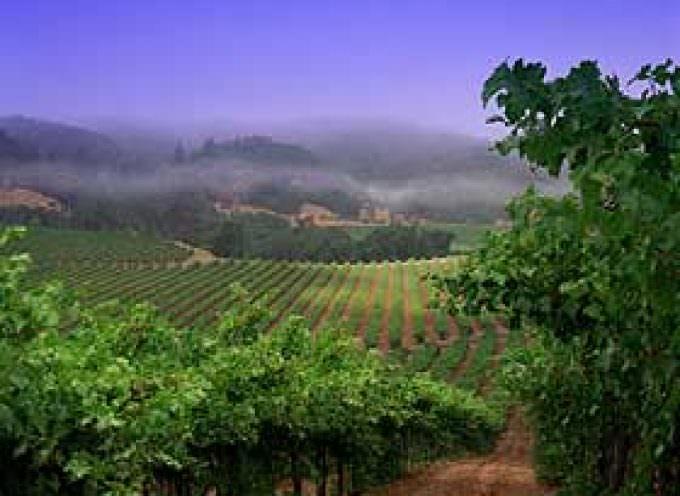 Seresin, La Mano: i vini con l'anima della Nuova Zelanda