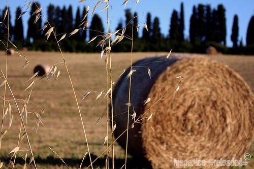 Agricoltura: Istat, cresce l'uso dei fitofarmaci nel settore cerealicolo