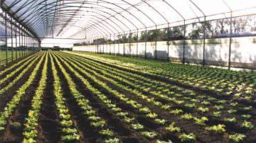 Agricoltura: Politi lancia due contromisure contro la crisi, attuabili subito