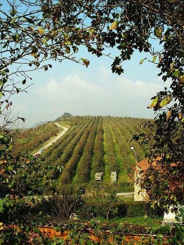 """Trentino Alto Adige: Presentato un modello di """"frutteto sostenibile"""""""
