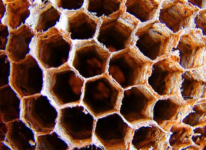 Miele: L'Unaapi chiede al Ministro Zaia di rendere pubblico lo stato di salute delle api