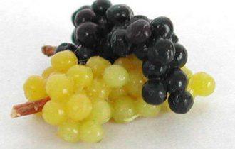 Vendemmia in piazza e uve del Frascati gratis per salvare il vino di Cicerone