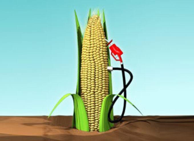 Assocostieri: dal 5 settembre sono entrate in vigore le agevolazioni per la produzione di bioetanolo