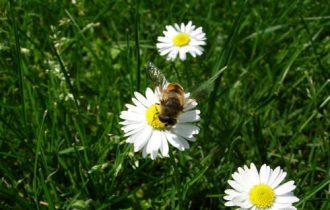Boom dei consumi per il miele
