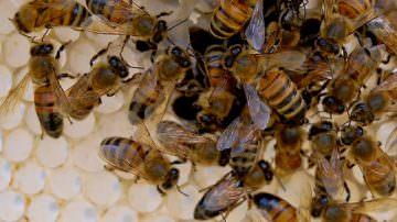 Agricoltura: La sospensione dei neonicotinoidi sarà prorogata per l'anno agricolo 2010