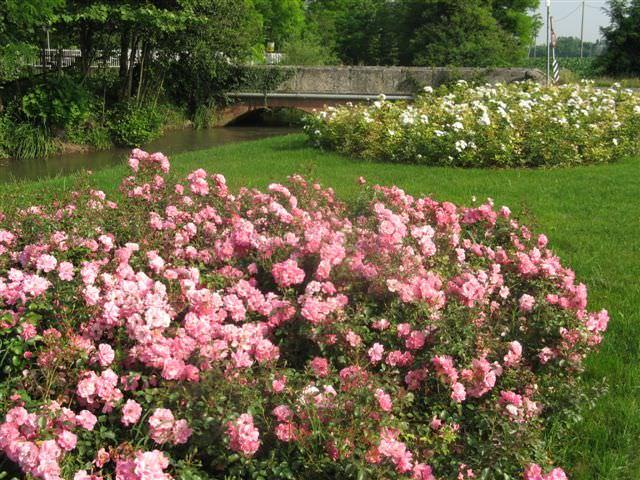 Ambiente: Coldiretti, più verdi e fiorite le città italiane (+6%)