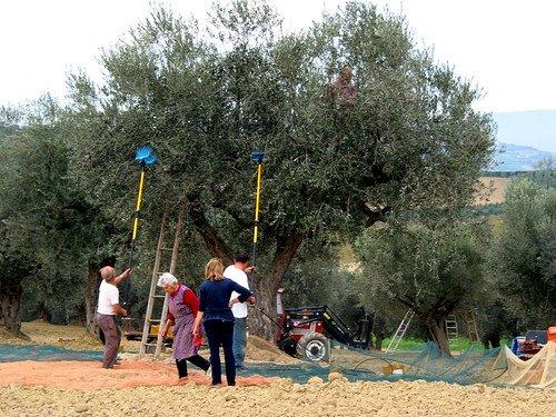 Trentino: Raccolta della frutta in sicurezza