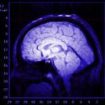 Cellule staminali: entrano dal naso, riparano il cervello