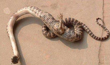 Cina, trovato serpente con una zampa artigliata