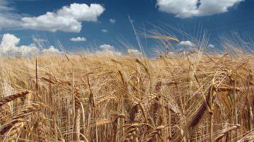 """Inflazione: L'agricoltura tiene a freno la """"corsa"""" dei listini alimentari"""
