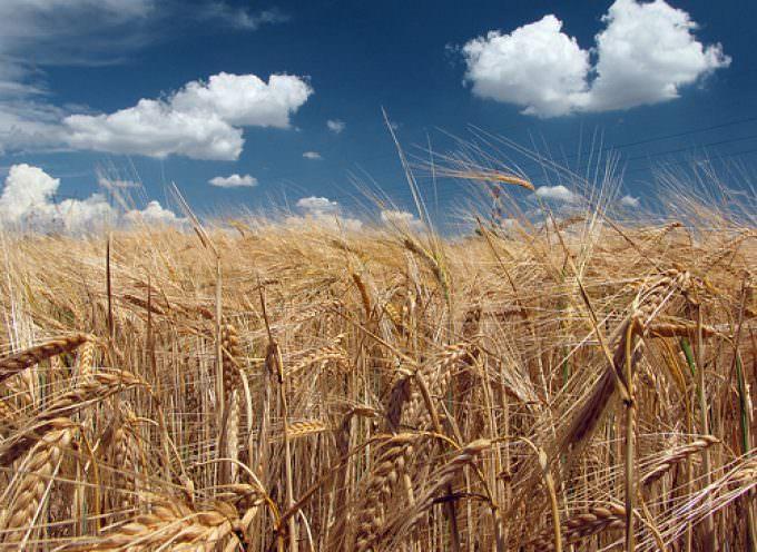 Istat – Confermato ad agosto aumento dei prezzi per i prodotti alimentari