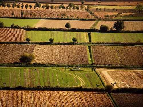 Crisi in agricoltura: Nel 2010 oltre 25 mila imprese costrette a chiudere