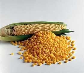 Agricoltura: Prima la pioggia, ora il killer del mais…