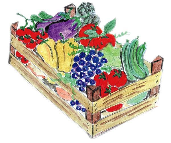 La lunghezza delle zucchine: da inutile burocrazia a baluardo della qualità