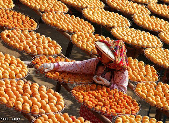 Cia: Maggiori diritti e potere alle donne agricoltrici