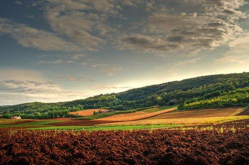 Una nuova legge per il rilancio dell'agroalimentare