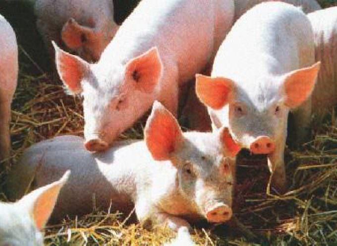 Zootecnia: La nuova norma sulle emissioni sarà un'ulteriore peso