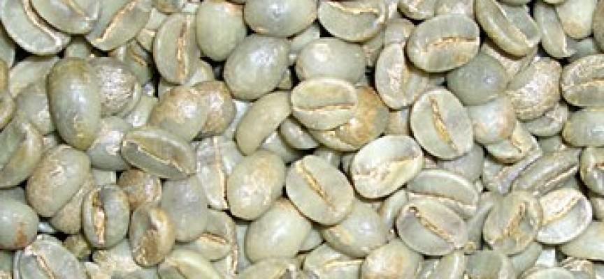 La speranza nella tazza: il caffè verde consuma grassi e zuccheri