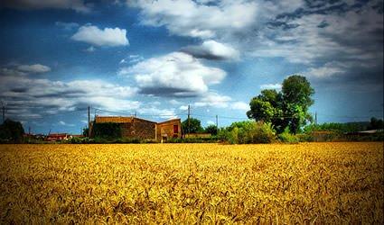 """Agricoltura: La ripresa economica è possibile senza dire """"no"""" a tutto a priori"""