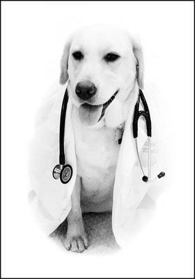 Dottori animali: curano il cuore, stimolano la mente