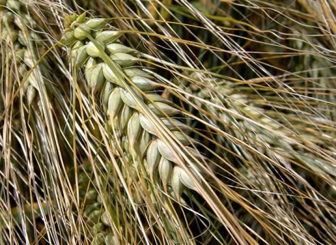 Agricoltura: Presentato Ddl contro la crisi