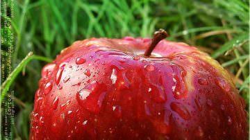 Australia. Ecco RS 103-30, la super mela che rimane croccante per mesi