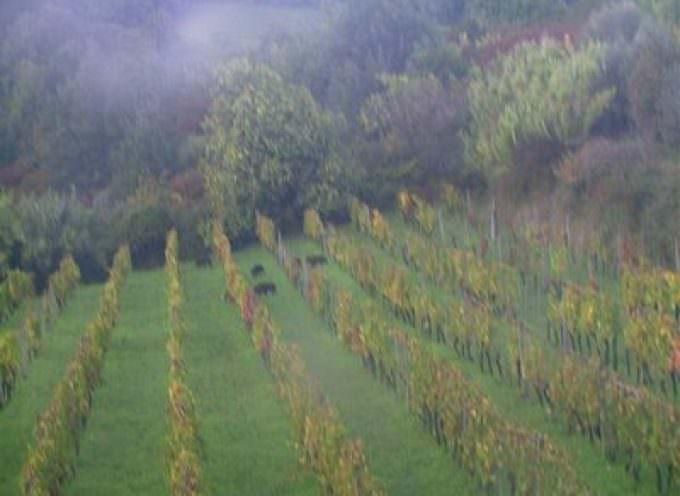 170 aziende, 2.000 etichette: la Sicilia a Vinitaly